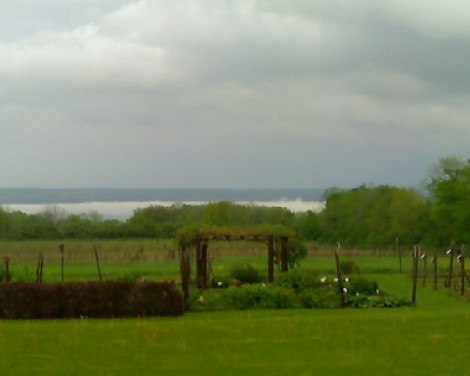 Grapevines on a grey and gloomy evening, lake esconced by billowy fog.  The view from AWRC.